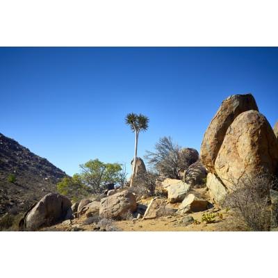 Magnificent Landscapes - ML 033