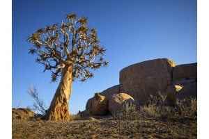 The magical Richtersveld (Note: Photo rich page will take some time to load, Scroll to view)