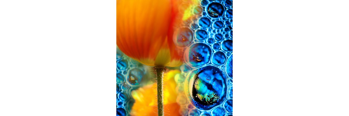 Poppy bubbles